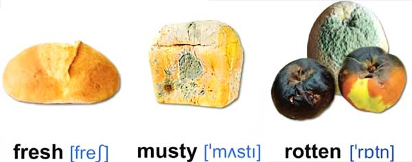 fresh musty