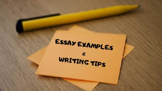Essay Examples For ESL EFL Students